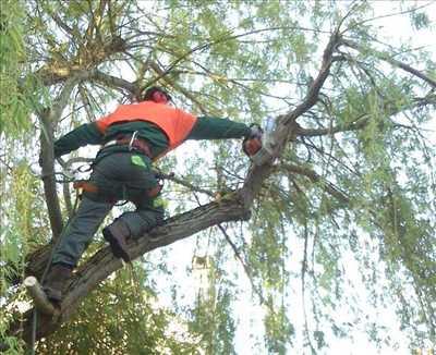 Photo Abattage d'arbre n°563 dans le département 33 par Yann
