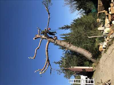 Photo Elagage d'arbre n°568 zone Vaucluse par Benoit