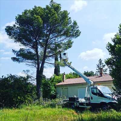 Exemple Elagage d'arbre n°569 zone Vaucluse par Benoit