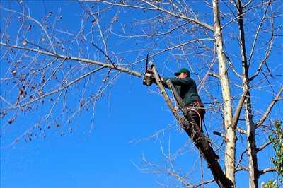 Photo Elagage d'arbre n°6 à Gap par Jerome