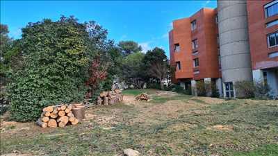Photo Elagage d'arbre n°604 zone Hérault par travaux du pic
