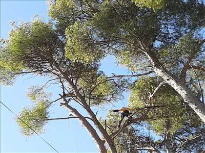 Photo élagueur d'arbre n°619 dans le département 13 par Damon Elagage