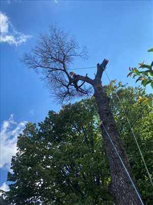 Photo élagueur d'arbre n°620 zone Bouches-du-Rhône par Damon Elagage