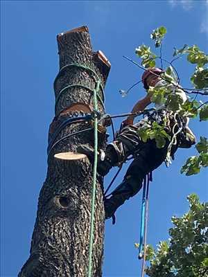 Exemple élagueur d'arbre n°621 zone Bouches-du-Rhône par Damon Elagage