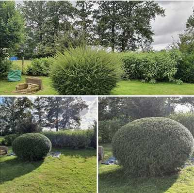 Photo jardinier n°630 à Dreux par maisonpropre45