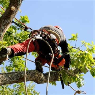 Exemple Elagage d'arbre n°9 zone Haute-Garonne par Dylan
